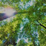山と瞑想*高尾山セラピーハイキング
