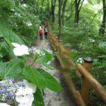 五感をひらく高尾山ハイキング