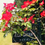 清水公園 花ファンタジアへ*バラの季節